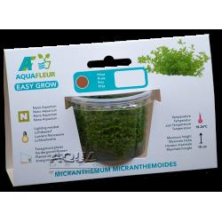 Easy Grow - Micranthemum micranthemoides (zselés növény - 7)