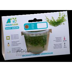 image: Easy Grow - Micranthemum umbrosum (zselés növény - 8)