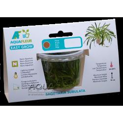 Easy Grow - Sagittaria subulata (zselés növény - 11)