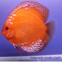 Diszkoszhal Marlboro Red (STENDKER)!!! 6,5 cm