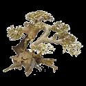 Bonsai tree Medium